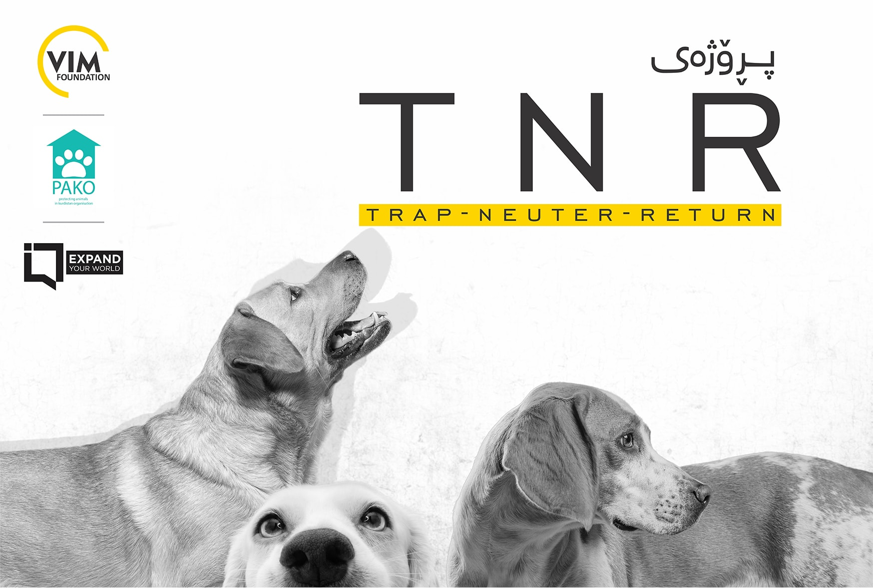 In collaboration with Pako Organization, Vim Foundation is announcing the (TNR) project, brief for Capture, Neuter, and Return.